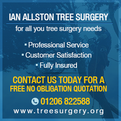 Colchester Tree Surgeon